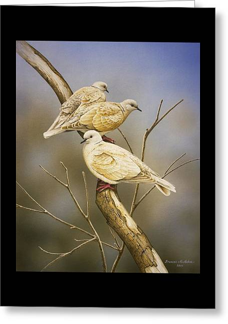 Tranquillity - Ring-necked Doves Greeting Card by Frances McMahon