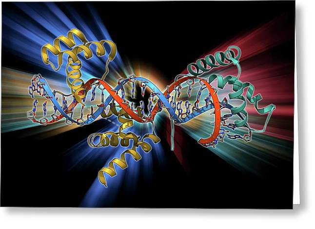 Transcription Factors Bound To Dna Greeting Card