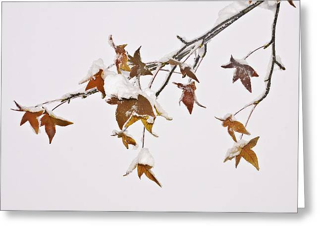 Greeting Card featuring the photograph Transition by Sherri Meyer