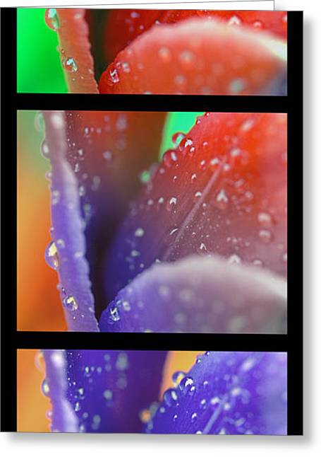 Transitions Greeting Card by Robert Culver