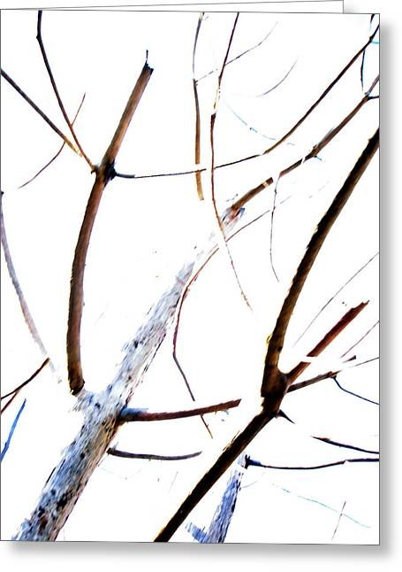 Transparency Composition Greeting Card by Michel Mata