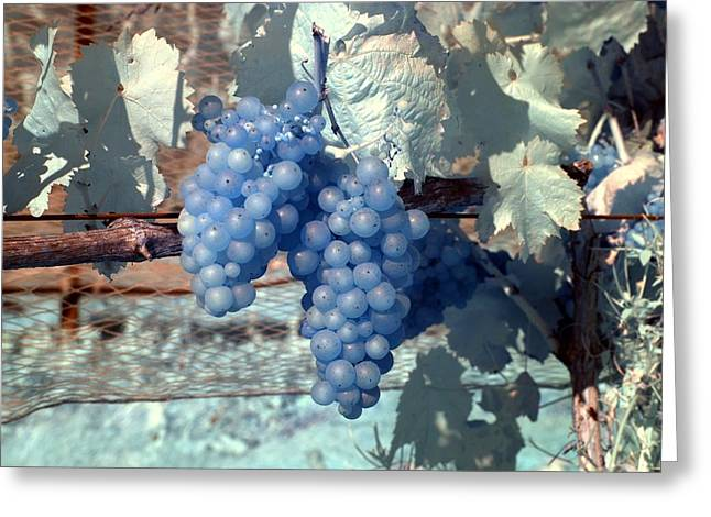 Greeting Card featuring the photograph Transparent Grapes by Rebecca Parker