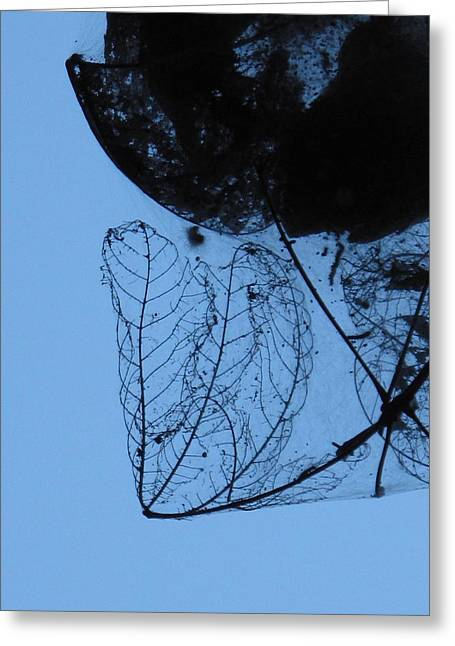 Transparent Leaves Greeting Card
