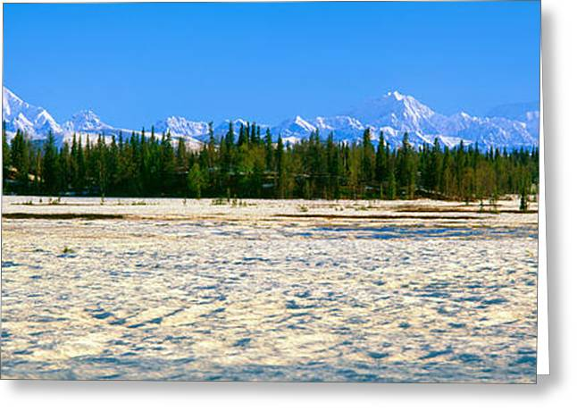 Trapper Creek And Mount Mckinley, Alaska Greeting Card by Panoramic Images