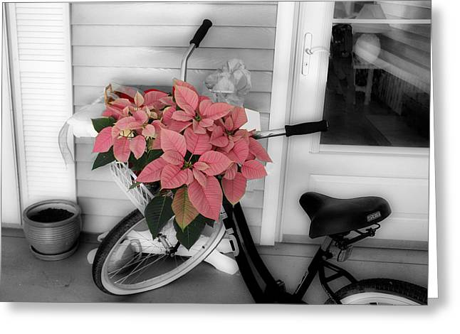 Greeting Card featuring the photograph Traveling Poinsettia by Rosemary Aubut