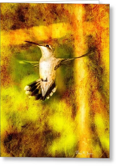 Hummingbird - In Flight - Treading Air Greeting Card by Barry Jones