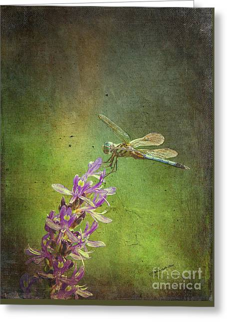 Treading Lightly Greeting Card by Patricia Griffin Brett