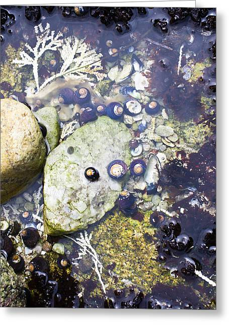 Treasures In The Tidepool Greeting Card
