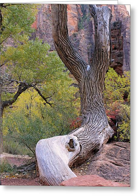 Tree @ Zion National Park Greeting Card