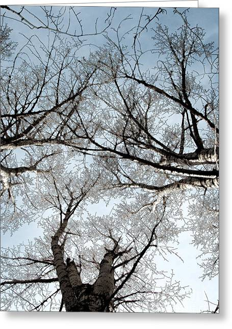 Greeting Card featuring the photograph Tree 2 by Minnie Lippiatt