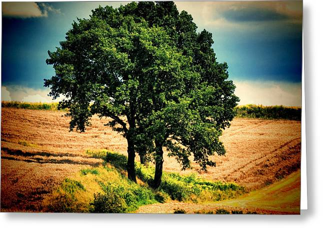 Tree Alone Greeting Card by Boon Mee