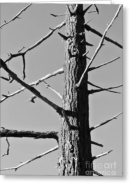 Tree Ancestor Greeting Card