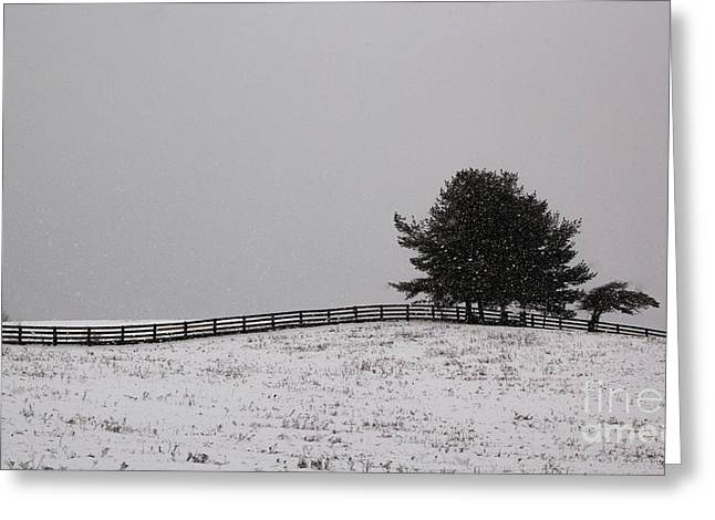 Tree And Fence In Snow Storm Greeting Card