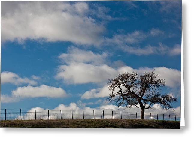 Tree And Fence On A Landscape, Santa Greeting Card by Panoramic Images
