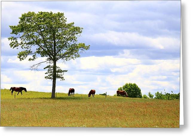 Tree And Horses Greeting Card