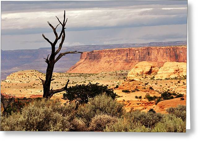 Tree And Mesa Greeting Card by Marty Koch