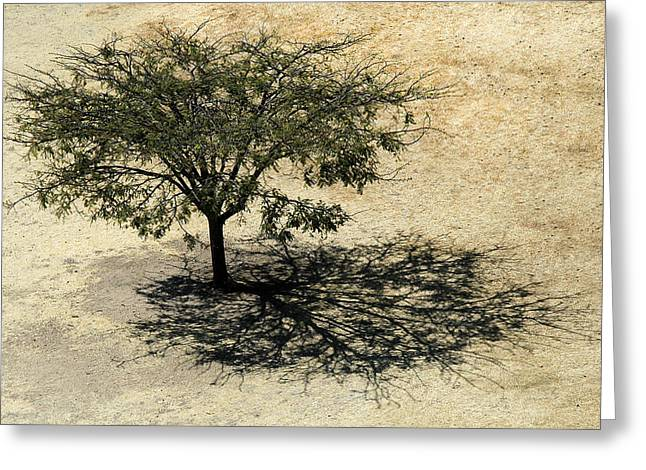 Tree And Shadow At Monte Alban Greeting Card