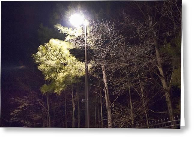 Tree And Streetlight  Greeting Card by J Riley Johnson