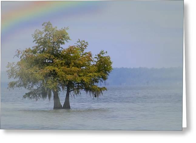 Tree And The Rainbow Greeting Card