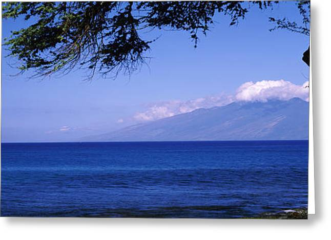 Tree At A Coast, Kapalua, Molokai Greeting Card by Panoramic Images