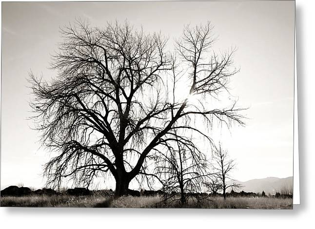 Tree At Harpers Lake Louisville 2 Greeting Card by Marilyn Hunt