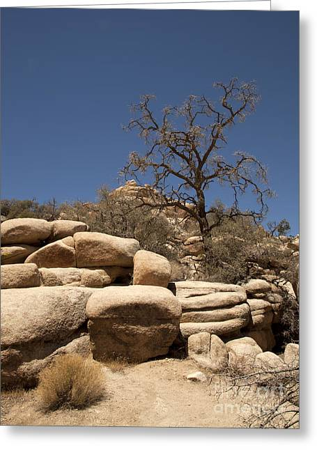 Tree At Joshua Tree Greeting Card by Amanda Barcon