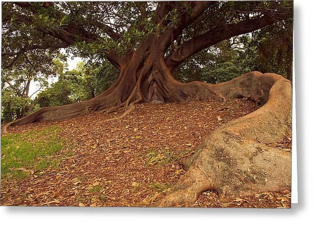 Tree At Royal Botanic Garden Greeting Card
