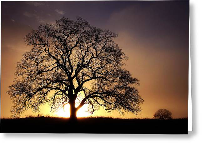 Tree At Sunrise In The Fog Greeting Card