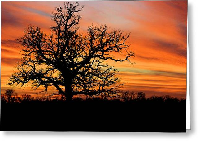 Tree At Sunset Greeting Card by Elizabeth Budd