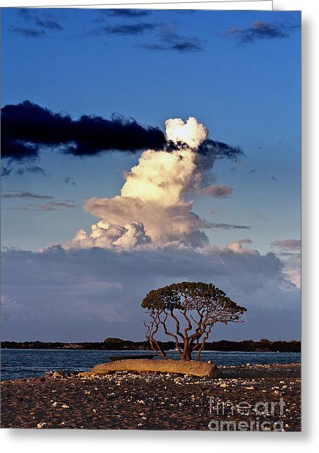 Tree At The Beach Greeting Card by Karl Voss