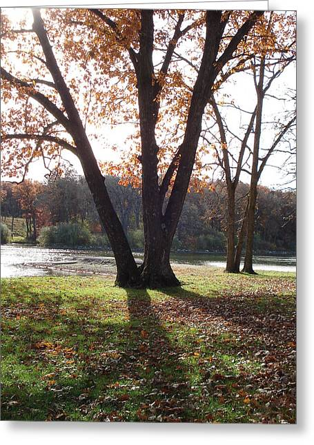 Greeting Card featuring the photograph Tree At The Lake by J L Zarek