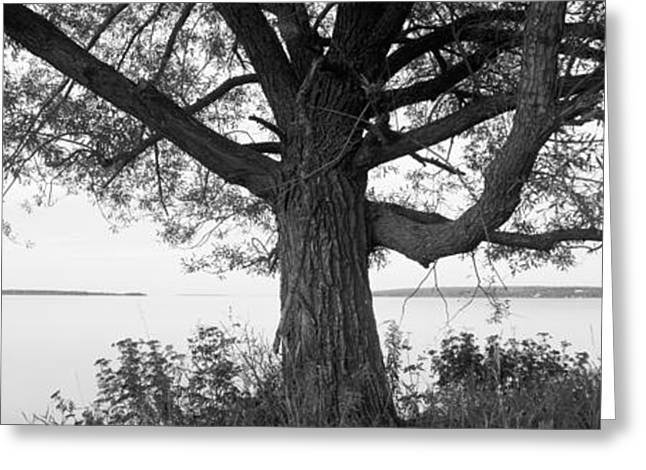 Tree At The Lakeside, Wisconsin, Usa Greeting Card by Panoramic Images