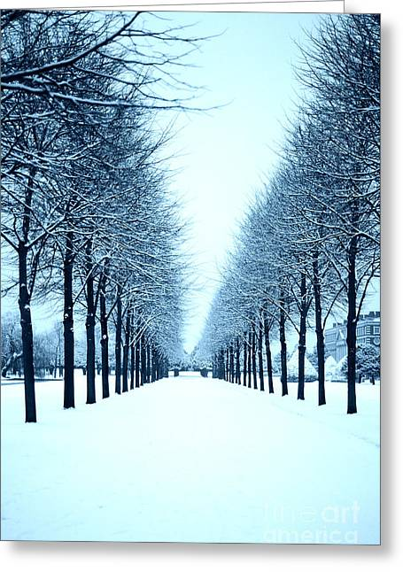 Tree Avenue In Snow Greeting Card
