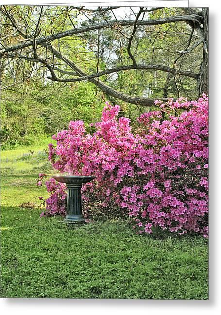 Tree Azalea And Birdbath Scenic Greeting Card