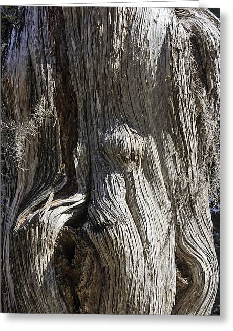 Tree Bark No. 3 Greeting Card by Lynn Palmer