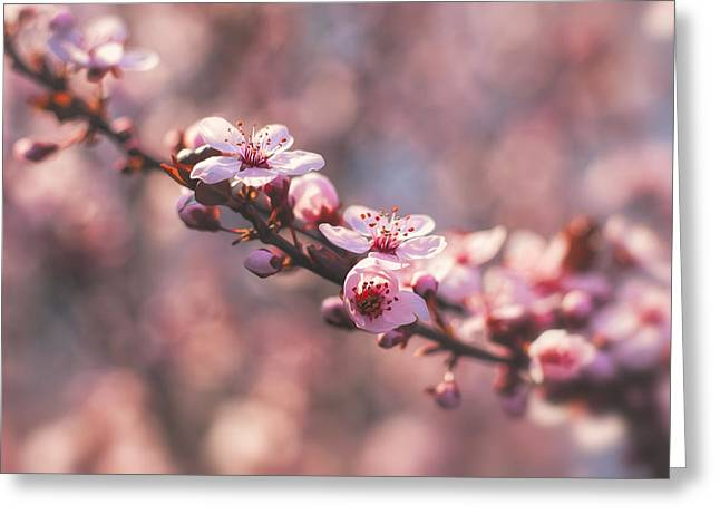 Tree Branch Bloom Greeting Card