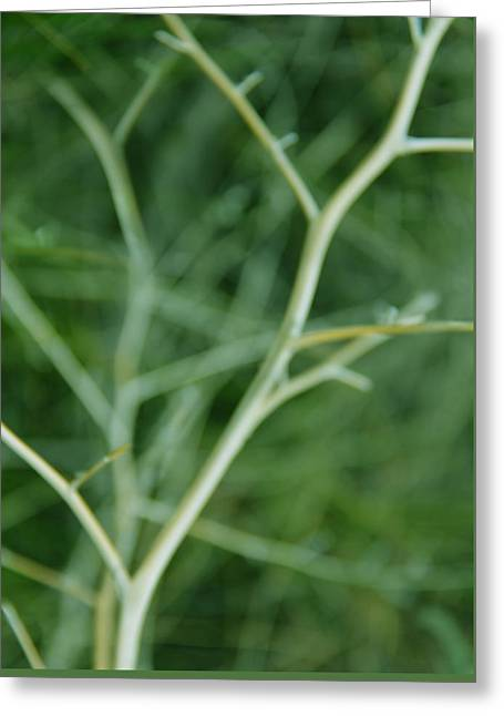 Tree Branches Abstract Green Greeting Card by Jennie Marie Schell