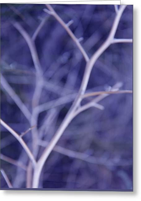 Tree Branches Abstract Lavender Greeting Card by Jennie Marie Schell
