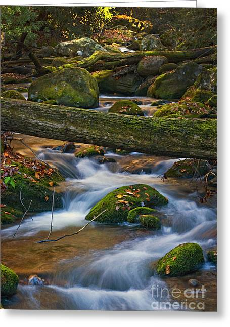Tree Bridge In The Smokies Greeting Card by Paul W Faust -  Impressions of Light