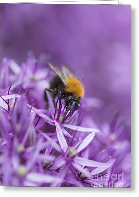 The Tree Bumblebee Greeting Card by Tim Gainey