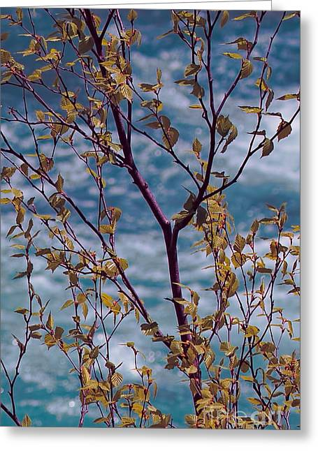 Tree By Babbling Brook Greeting Card by Terry Weaver
