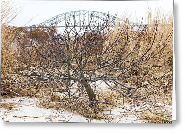 Tree By Captree Bridge Greeting Card