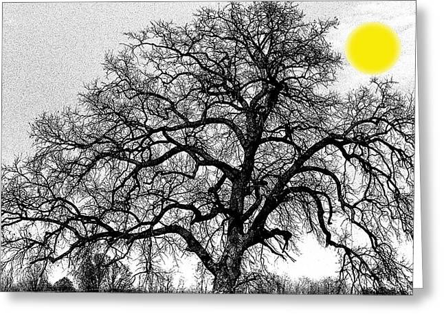 Greeting Card featuring the photograph Tree By Moon Light by Wanda Brandon