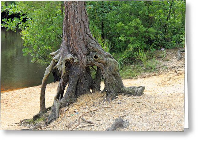 Tree By River Greeting Card