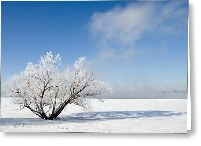 Greeting Card featuring the photograph Tree By The River Covered With Hoar Frost. by Rob Huntley