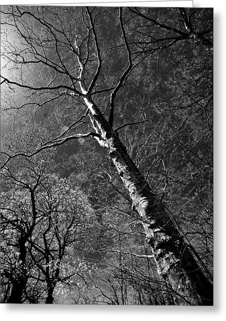 Tree Capillaries Greeting Card
