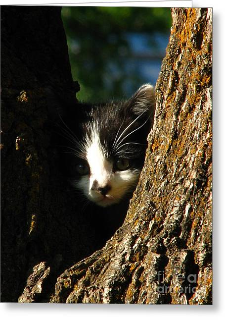 Tree Cat Greeting Card by Greg Patzer