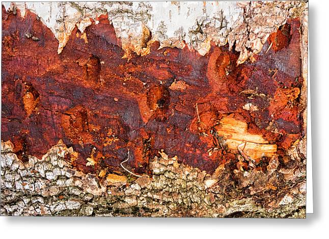 Tree Closeup - Wood Texture Greeting Card by Matthias Hauser