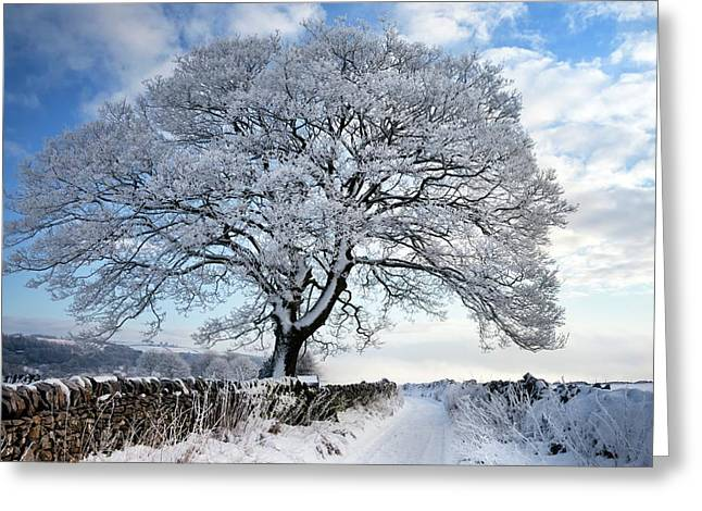 Tree Covered In Hoar Frost Greeting Card by Alex Hyde
