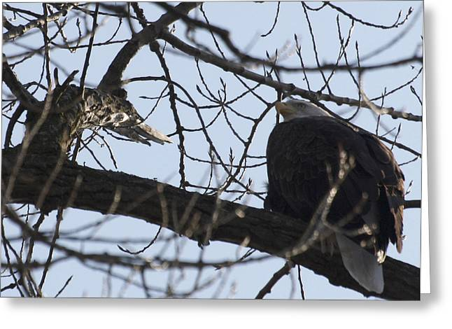 Tree Eagle Greeting Card by Valerie Wolf